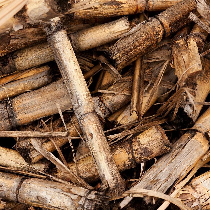 Sistemas de aprovechamiento de la biomasa