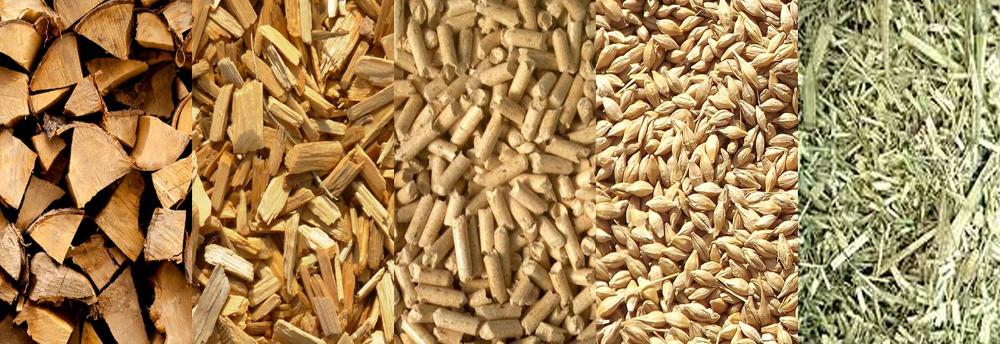 feria de la biomasa