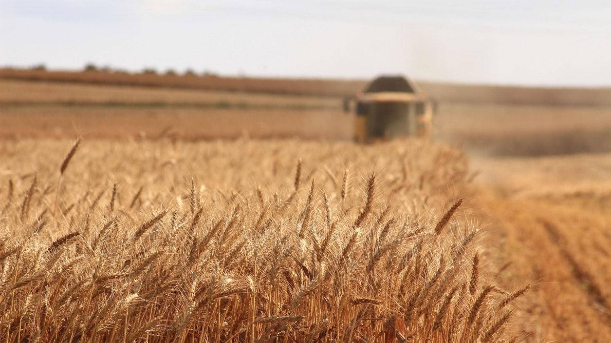 bioetanol biocombustible maiz